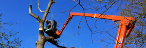 MC Access cherry picker hire