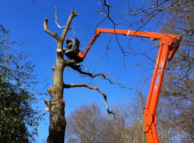 Tree Surgeon Cherry Picker Hire image